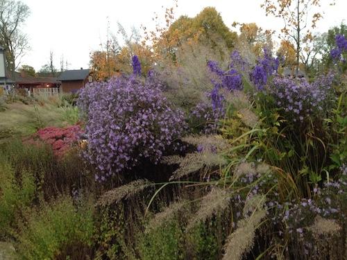 Gröna och lila nyanser i trädgård
