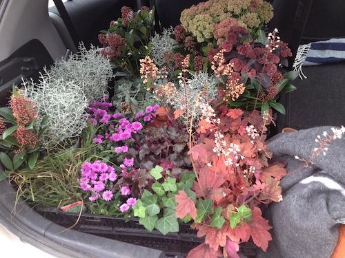 Växtleverans till kund, växter i baklucka