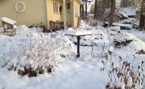 Trädgård i vintermiljö